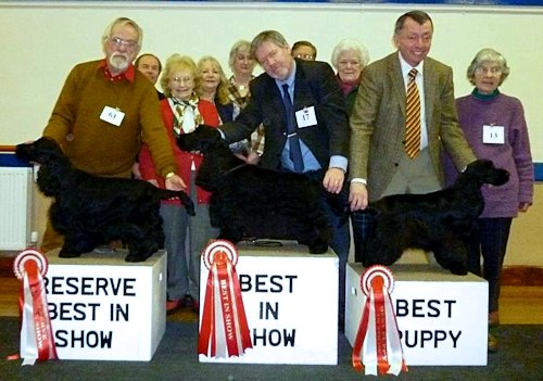 Best In Show Feb 2013